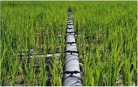 江苏:高效节水灌溉建设完成年度计划的81%