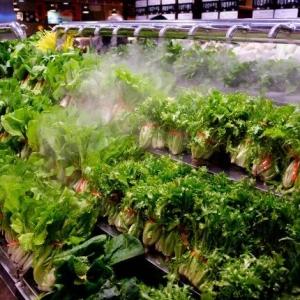 海南省启动无公害农产品认定工作