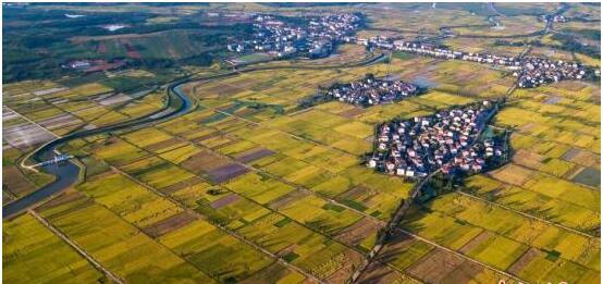农业农村部:今年以来多数农产品价格呈持续下跌走势