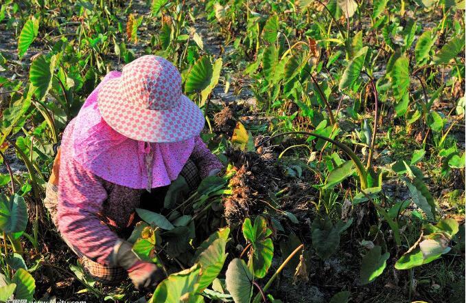 农业农村部:上半年主要农产品例行监测合格率97.1%