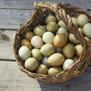 山鸡蛋的营养价值 每天吃几个最合适