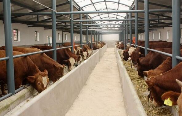 肉牛养殖场建设最新方