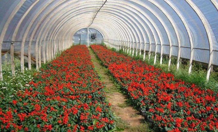 中国植物墙网谈苗木移栽 园林绿化苗木种植技术措施