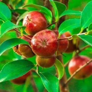 海归开辟山地种植油茶 3年实现万亩油茶林梦想