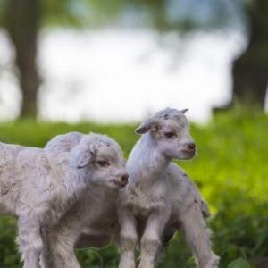 """从""""搬砖工""""到""""羊倌"""":农民马吾德喜脱贫"""