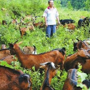 武汉首次将创业农民纳入支持范围 缓解创业压力