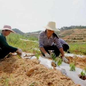 甘肃省临夏州实现贫困村农民合作社全覆盖