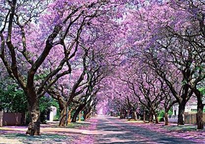 紫薇花的养殖方法和剩意事项邑拥有哪些