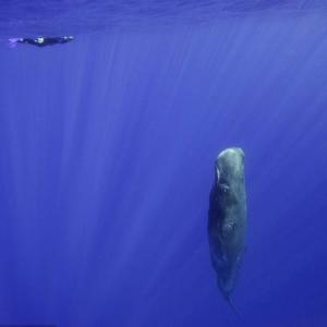 抹香鲸令人吃惊的名字来由 为什么会叫抹香鲸呢