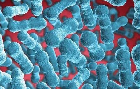 芽孢杆菌的对水产具体作用都有哪些