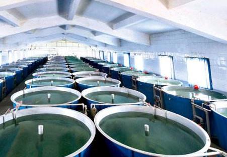内循环水养鱼还需要解决哪些问题