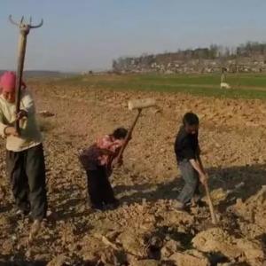 如果农民5年不种地,谁先扛不住?答案太残酷了!