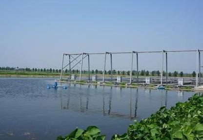 池塘养鱼一年亩产多少斤