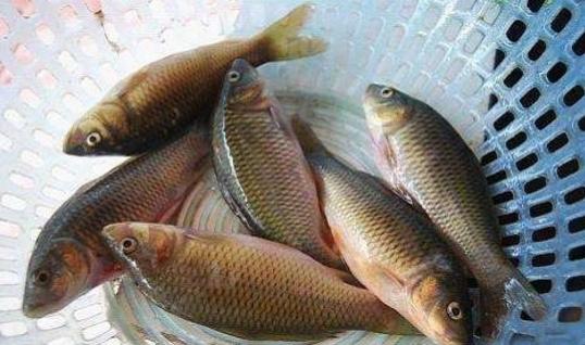 """并不建议食用油鱼 因为不小心就会""""漏油"""""""