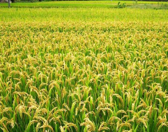 江西探索农业高质量发展路径