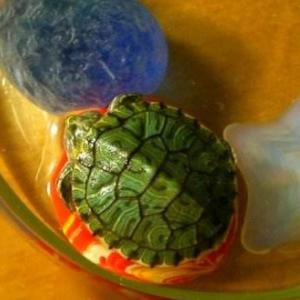 如何拯救重症肺炎的巴西龟呢?