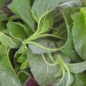 野苋菜的营养价值有哪些?