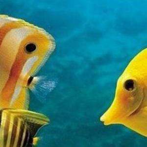 热带鱼要怎么养 有什么注意事项?