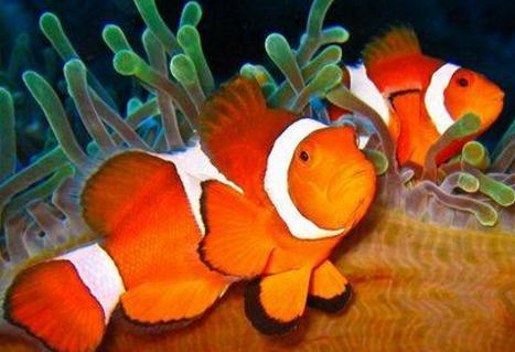 热带鱼怎么养 养热带鱼的注意事项 呼和浩特观赏鱼 呼和浩特龙鱼第1张