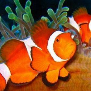 热带鱼怎么养 养热带鱼的注意事项