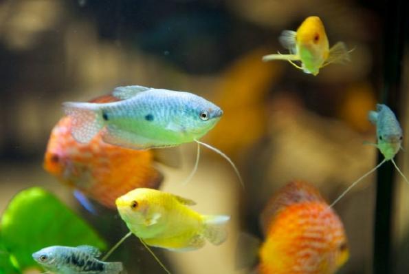 热带鱼怎么养 养热带鱼的注意事项 呼和浩特观赏鱼 呼和浩特龙鱼第2张