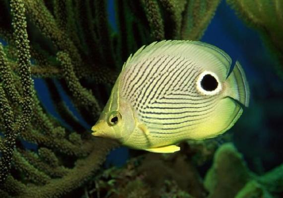 热带鱼怎么养 养热带鱼的注意事项 呼和浩特观赏鱼 呼和浩特龙鱼第3张