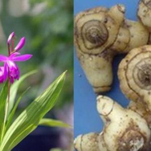 种植白芷需要什么条件 都有哪些功效与作用?