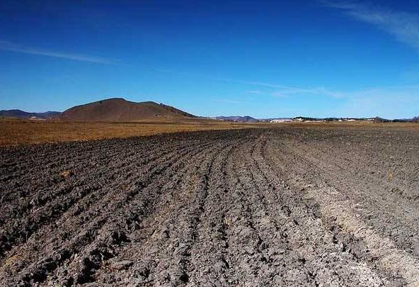 农村土地承包法拟明确土地经营权可流转