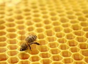 蜂胶的功效与作用有哪些 吃蜂胶有什么注意事项?