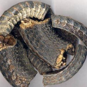 乌梢蛇的食疗价值的药用附方