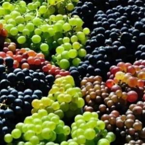 日常生活中的普通水果 葡萄的强大功效