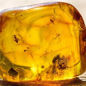世界上最轻盈的宝石琥珀 有什么功效作用呢?