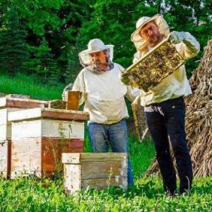 要想养好蜂 一定要了解它的养殖条件和注意事项!