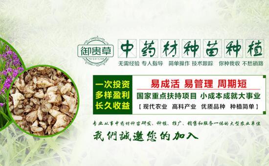 贵州华科金农生态农业发展有限公司  御贵草大众认可度高