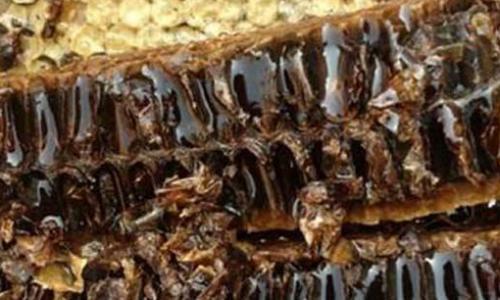 蜂胶的副作用是什么