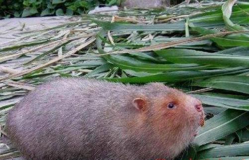 竹鼠养殖场对鼠舍的基本要求
