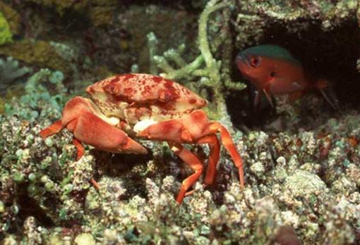 海蟹怎么保存最好?