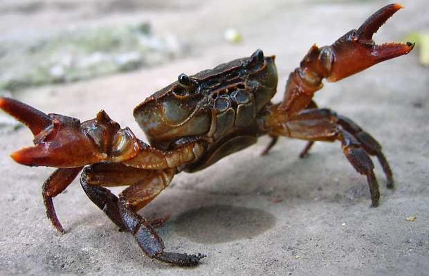 青蟹怎么保存不会死?