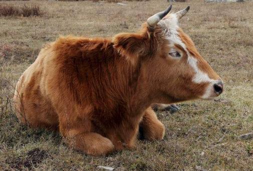 小型养牛场需要注意哪些问题