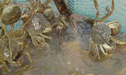 河蟹该怎么养殖