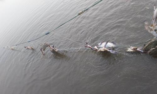 梭子蟹的养殖方法