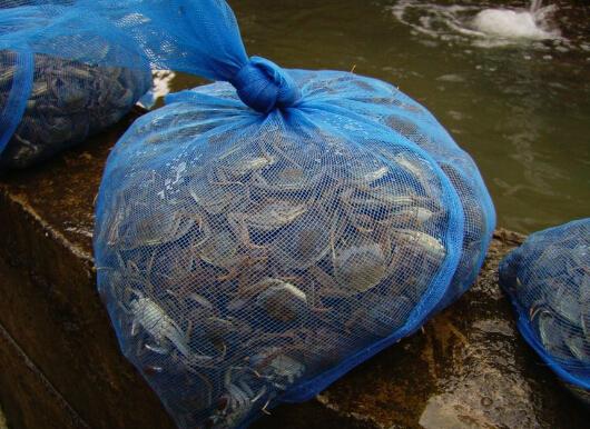 适合养殖的大闸蟹品种