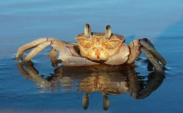 螃蟹养殖的日常管理