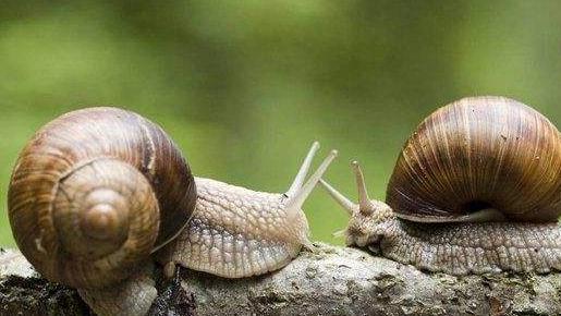 蜗牛养殖模式有哪些