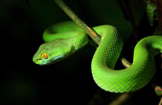 梦见蛇是什么意思?