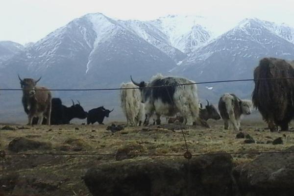 牦牛皮制品有哪些