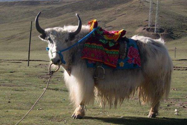 牦牛毛制品有哪些