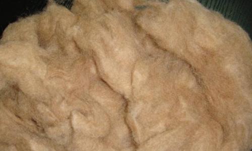 牦牛绒的优点和缺点
