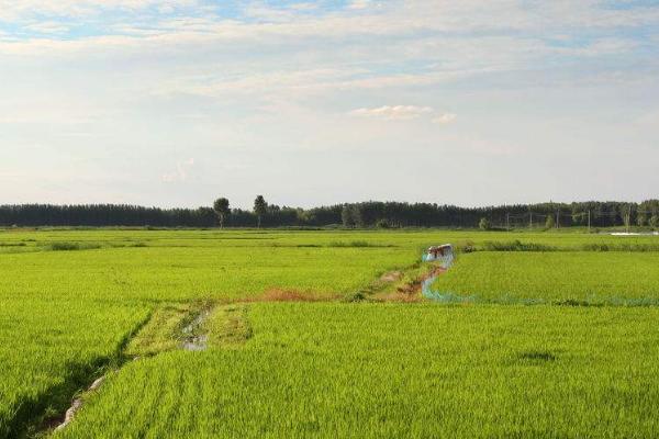 水稻种植管理技术