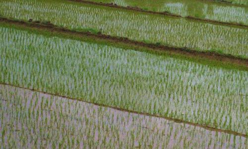 东北水稻和其他水稻区别